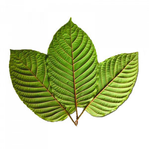 Red Vein Kratom Leaf